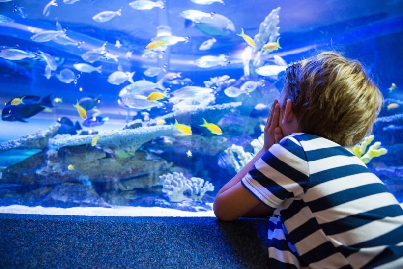 Lemmiklooma asemel Lemmiklooma asemel akvaarium