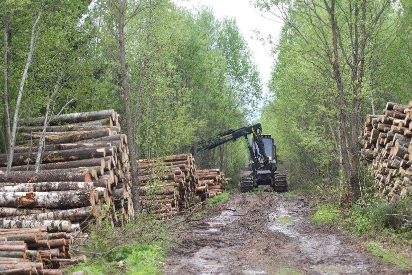 Vastukaja   Milline on Eesti metsade seis tegelikult?