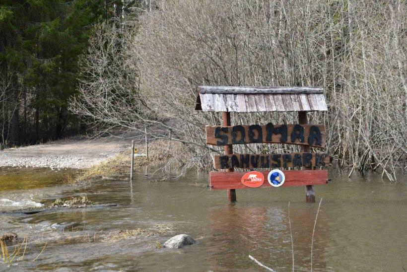 FOTOD ja VIDEO | Soomaal alanud viies aastaaeg ujutas teed üle