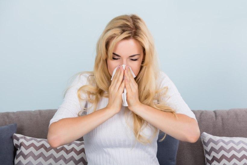 Kuidas allergilist nohu leevendada?