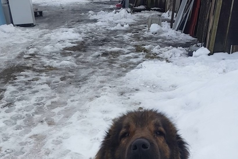 Koer nuttis ja ootas: peremeest ei tulnudki