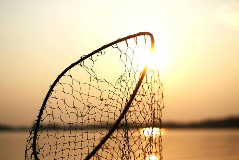 Pärnus peeti kinni kolm isikut, keda kahtlustatakse ulatuslikes kalapüügikuritegudes