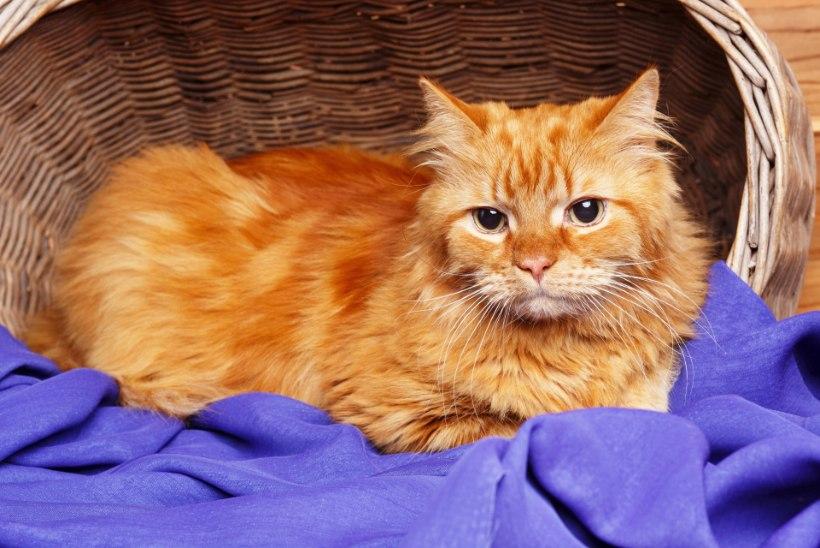 KURB! Pere tahtis nende juurde tagasi tulnud truu kassi magama panna