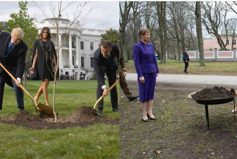 NAGU KAKS TILKA VETT |  Trump ja Macron ning Kaljulaid ja Mette-Marit istutavad puid