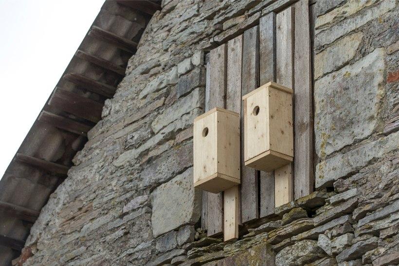 Koristage katustelt ja rõdudelt praht! Lindude pesitsusajal seda enam teha ei tohi!