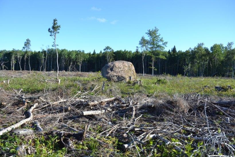 Looduslike pühapaikade kaitsja: ükski eestlane ei saa kindel olla, et ei istu hiiepuust tehtud laua taga