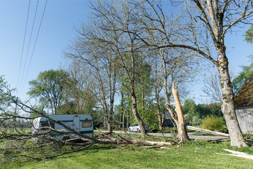 GALERII | Välk kooris puu paljaks