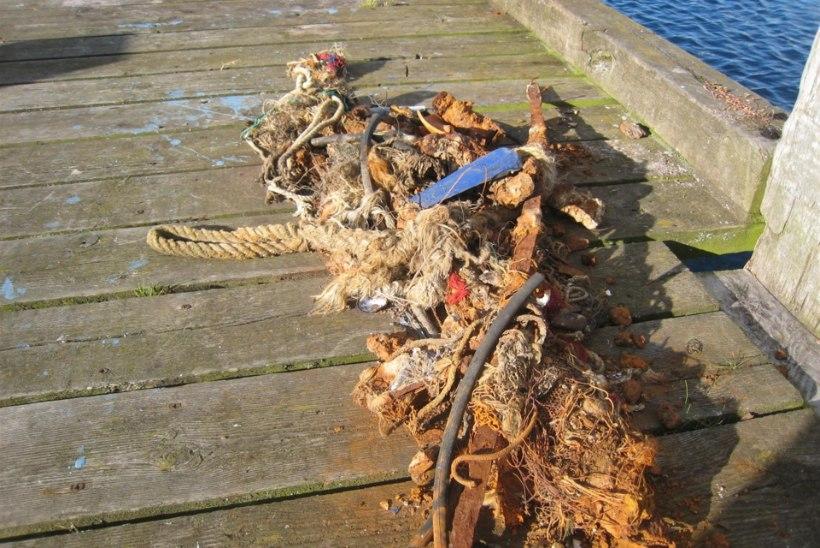Läänemere sadamad  jäävad hüljatud püügiriistade vastuvõtmisega jänni