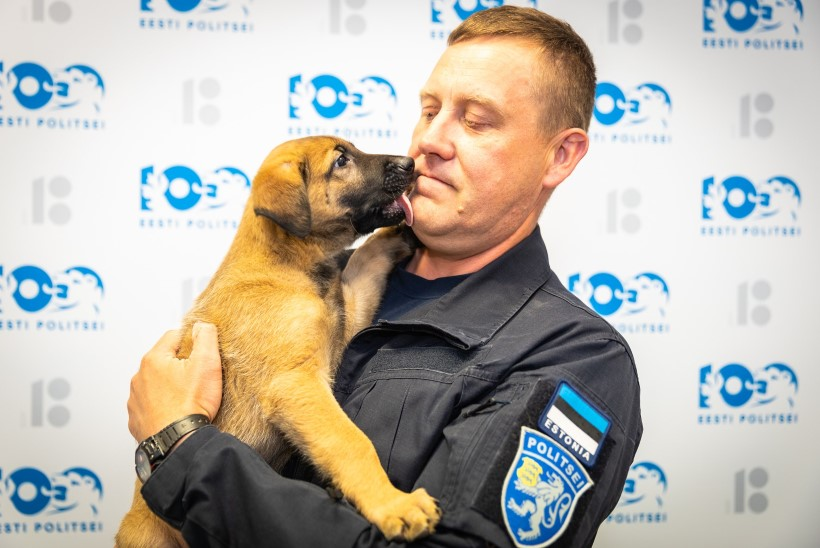 GALERII | NUNNUMEETER PÕHJAS: loomakliinik kinkis politseile lambakoera kutsika!