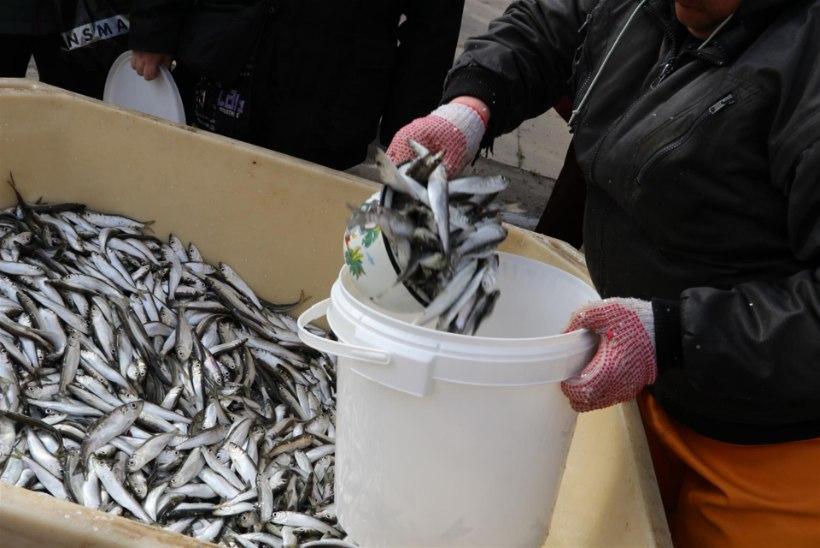 Avatud kalasadamate päeva külastas 25 000 kalasõpra