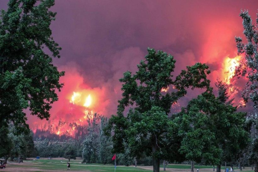 Teismeline metsasüütaja peab kahjutasudeks maksma 37 miljonit dollarit