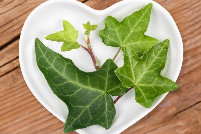 Homöopaatia – tillukeste terade tarkus