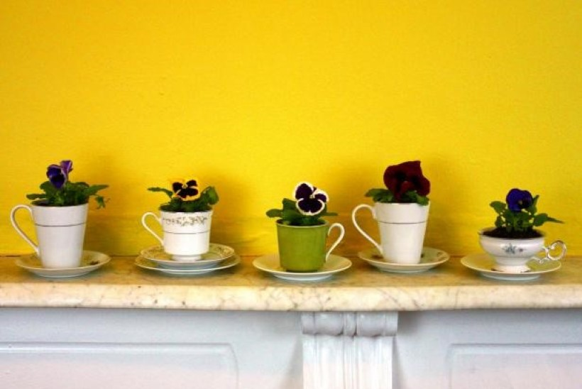Nii nutikas idee! Lilled kohvitassi kasvama!