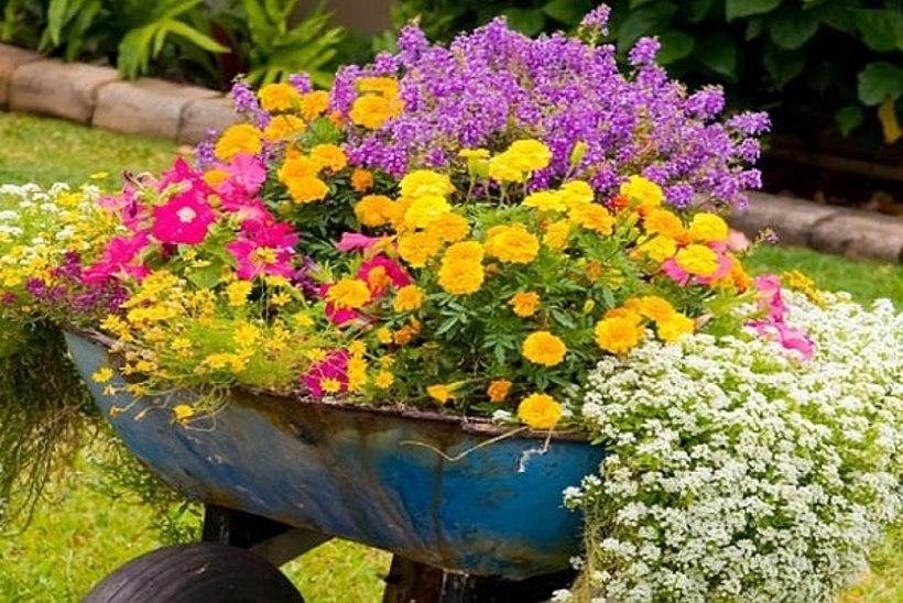 PANE TÄHELE: see on juuni aiatööde meelespea!