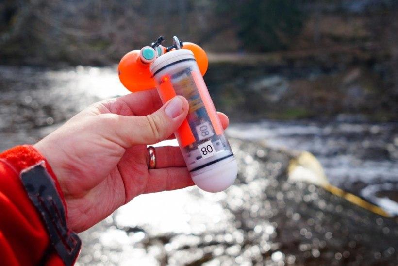 Robotkalad meie vetes