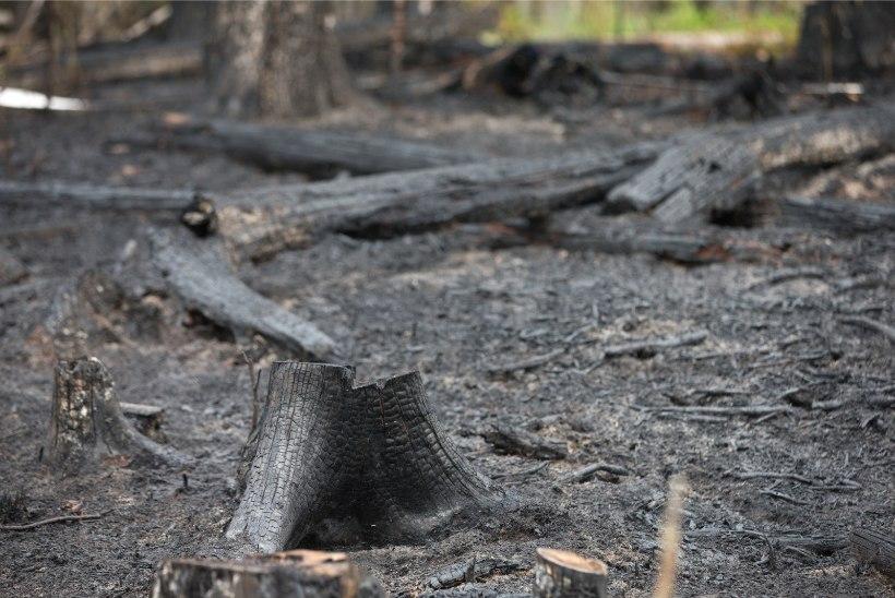 Juhtkiri   Ärme pane oma metsi põua ajal põlema