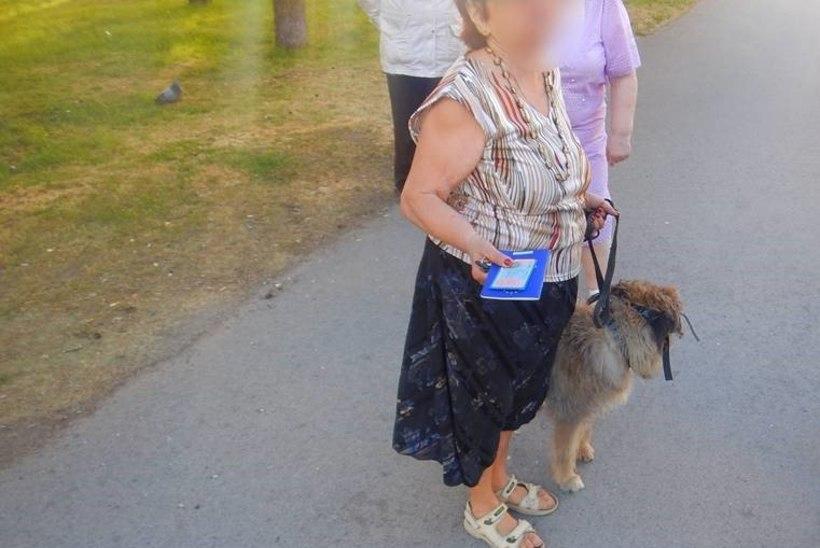 Vana ja rahulik koer lõi lapsele hambad sisse