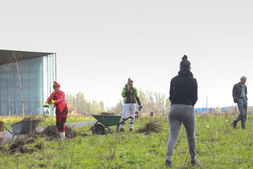 Ehituspraak: Tuhanded ERMi kibuvitsad lähevad komposti