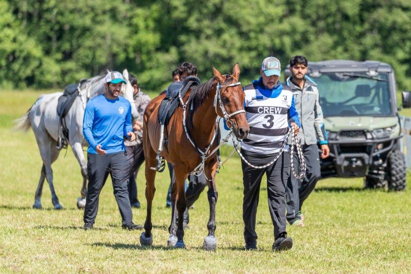 GALERII | PRINTS HOBUSEL: Dubai kroonprints kappab Padise ratsutamisvõistlusel