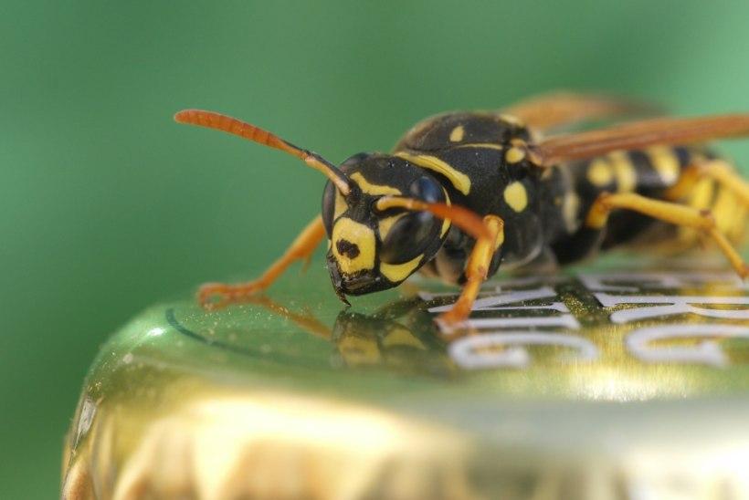 Putukaallergia risk suureneb iga järgmise nõelamisega