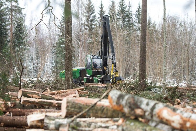 Metsakaitsjate paanika paneb rahamaiad omanikud metsa müüma