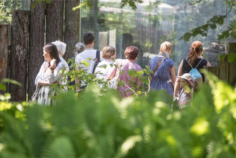 GALERII | Lapsed lustisid lastekaitsepäeval loomaaias