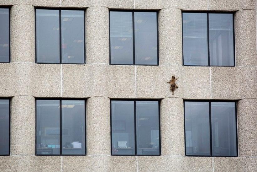 FOTOD JA VIDEO | Vapper pesukaru ronis 23-korruselise maja katusele