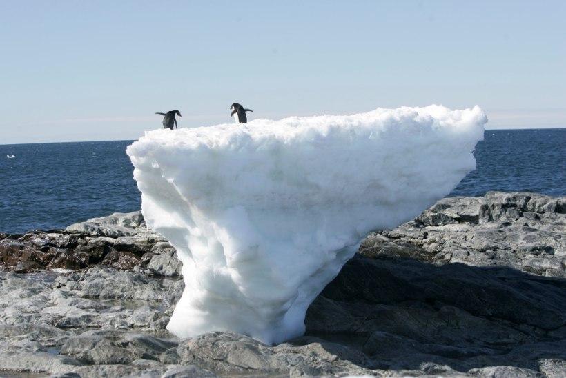 Antarktikas on jää sulamine kiirenenud