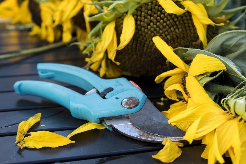 Aedniku spikker: kuidas ja mille järgi valida sobivaid aiakääre?