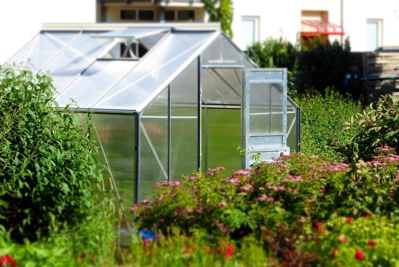 Hea nõuanne! Kuhu peaks aias paigutama kasvuhoone?