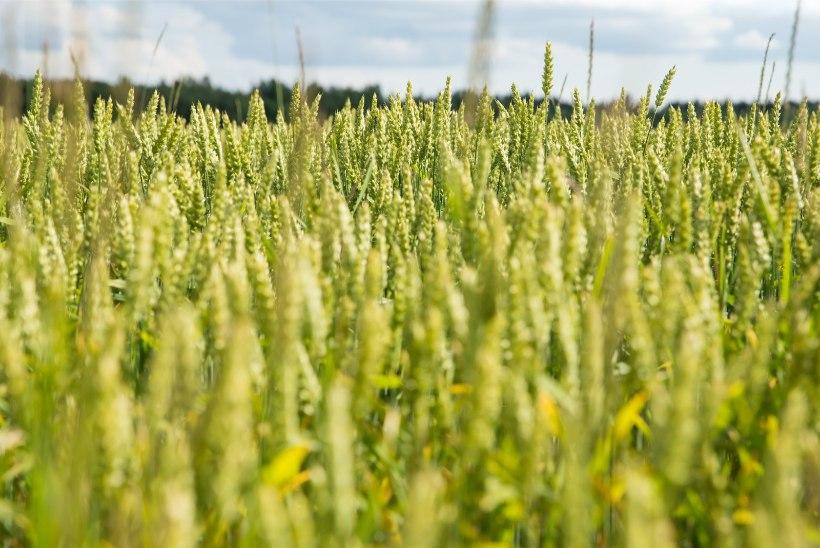 VIDEO   Setomaa vald kaalub kõigi põllumaade mahedaks muutmist