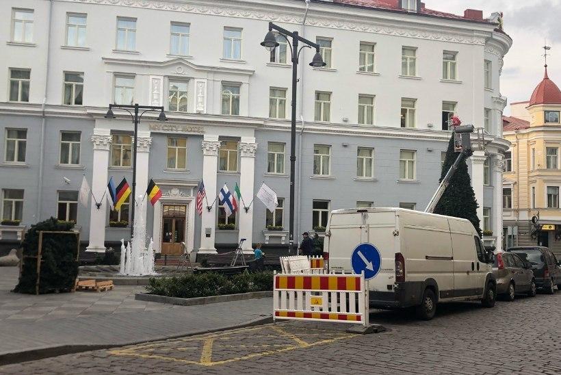 FOTOD | Tallinna vanalinna püstitati jõulukuusk... keset juunit!