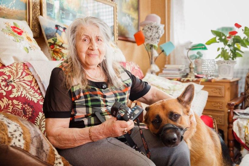 Naist rünnanud koera perenaine: Riho rebis end lahti ja tormas minema, ei aidanud isegi šokirihma elektrilöök!