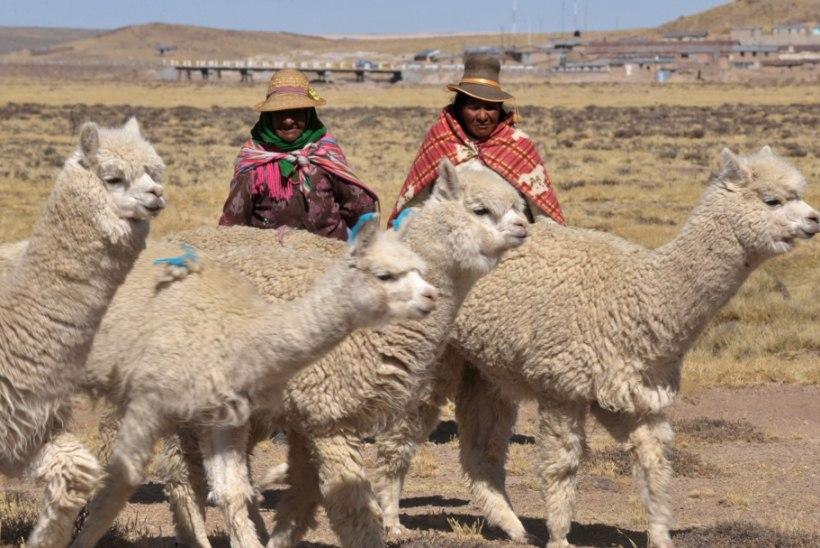 VIDEO | Peruud on tabanud külmalaine