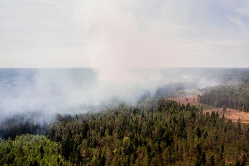 Päästeamet: kõige tuleohtlikumad kohad on Jõgeva- ja Ida-Virumaa