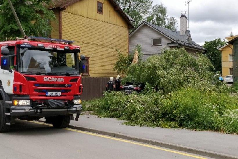 ÕL VIDEO & FOTOD | Kuhu sina oma auto parkisid? Eestit väisavad tuuleiilid kukutavad puid, mille alla jäävad sõidukid
