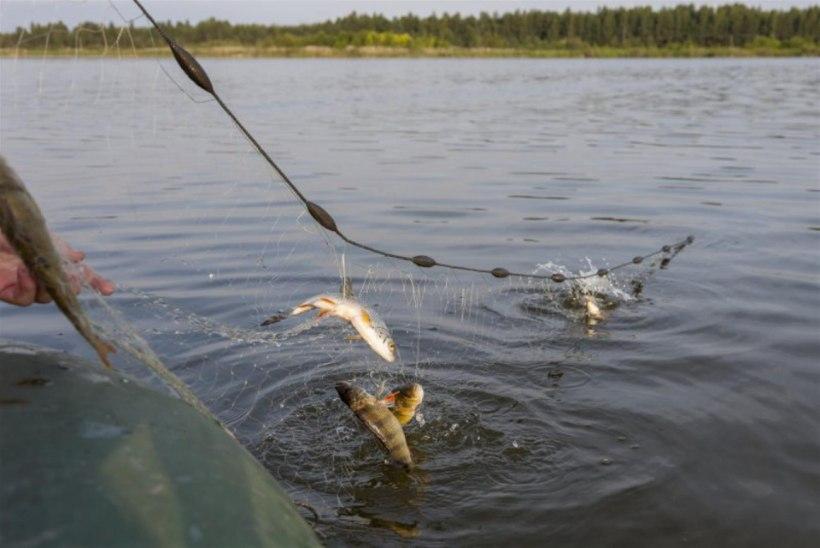 Püügiaruannete esitamata jätmisel uut kalastuskaarti ei saa