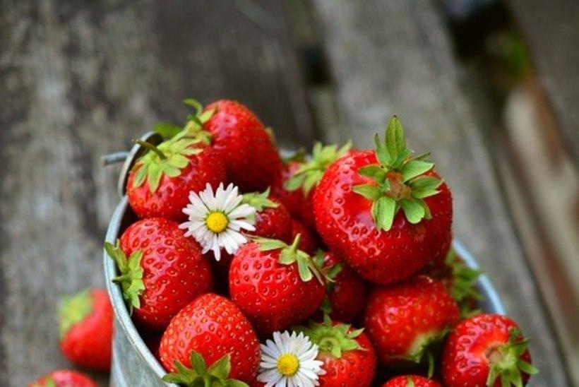 Nõu aednikule! Hoia maasikataimed terved.
