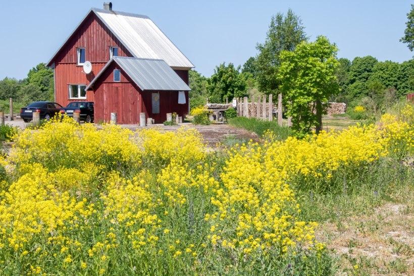 KÜLAS EESTI TALUDES | Lihtne eluviis Popi talus: teha tuleb kõike nii vähe kui võimalik – ja nii palju kui tarvis