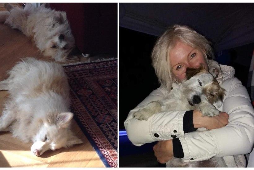 VIDEO | OJULAND KAKLEB NAABRIGA: naise koerad ründasid võõrast last