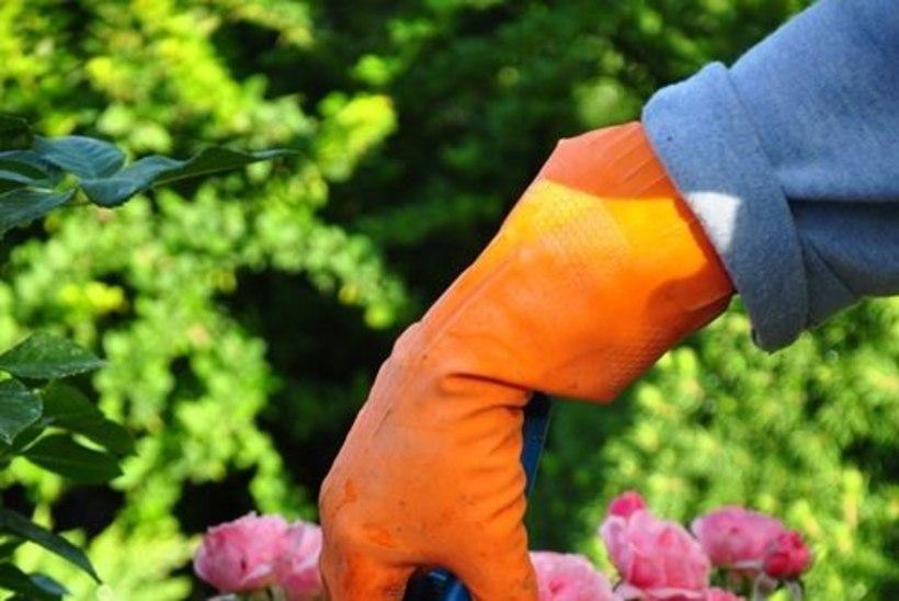 Pane tähele: see on juuli aiatööde meelespea!