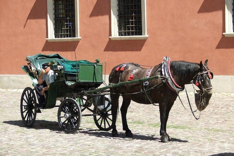 Ehmunud hobune tormas Tallinnas ratturile otsa