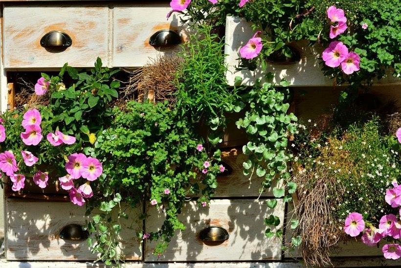 4 viisi, kuidas kasutada taimi kujunduselemendina