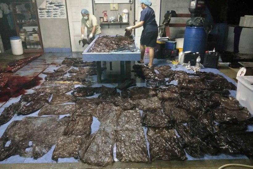 KURVAD FOTOD | Tais leiti vaal, kes oli alla neelanud üle 80 plastkoti