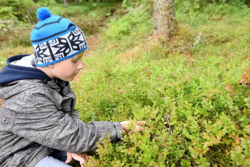 KÜLAS EESTI TALUDES | Väiketalu vaevad: piimalambad panevad proovile eestlaste konservatiivsuse