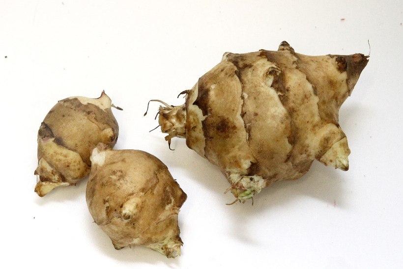 Süsivesikud maapirnilt ja kartulilt!