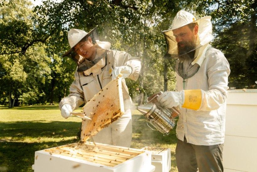ÕL VIDEO JA FOTOD | Kaljulaid: Kadrioru mesi on eksklusiivne, olen ise seda vähe söönud