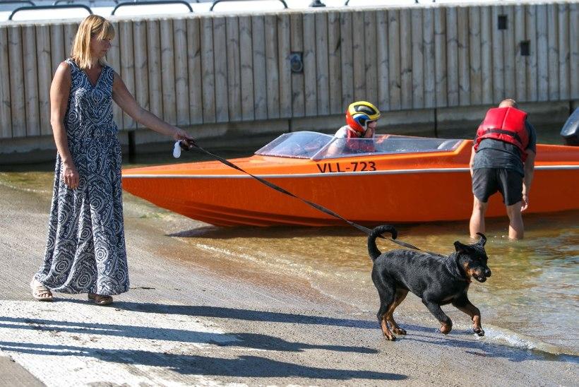 GALERII JA VIDEO   Loomaomanikud lõbutsesid merepäevadel oma lemmikutega aerulaudadel