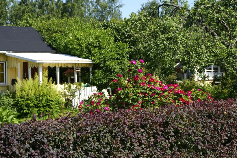 Roosid aias  – nii saad endale tõeliselt kauni lillepeenra