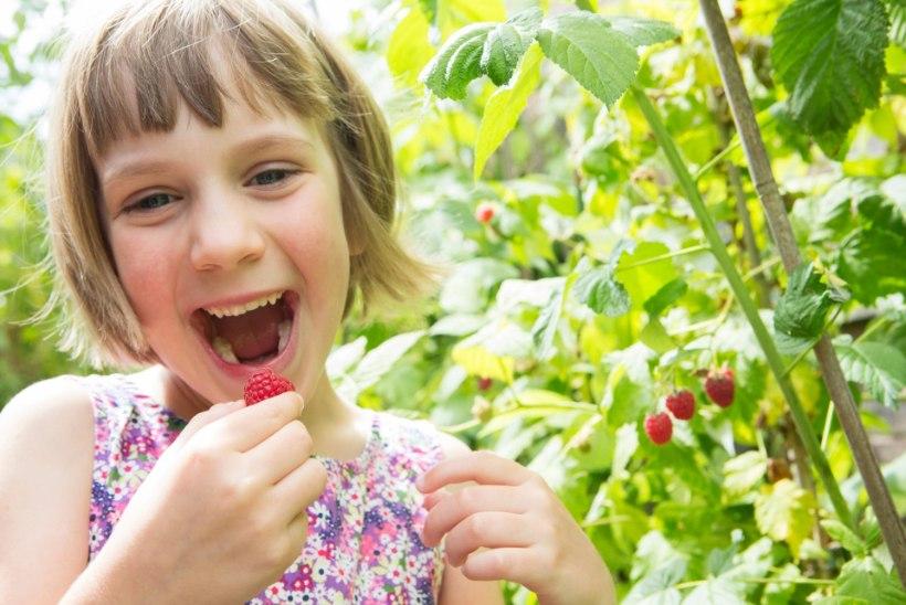 HIINA MEDITSIIN SOOVITAB: söö suvel neid toite, et püsida terve!